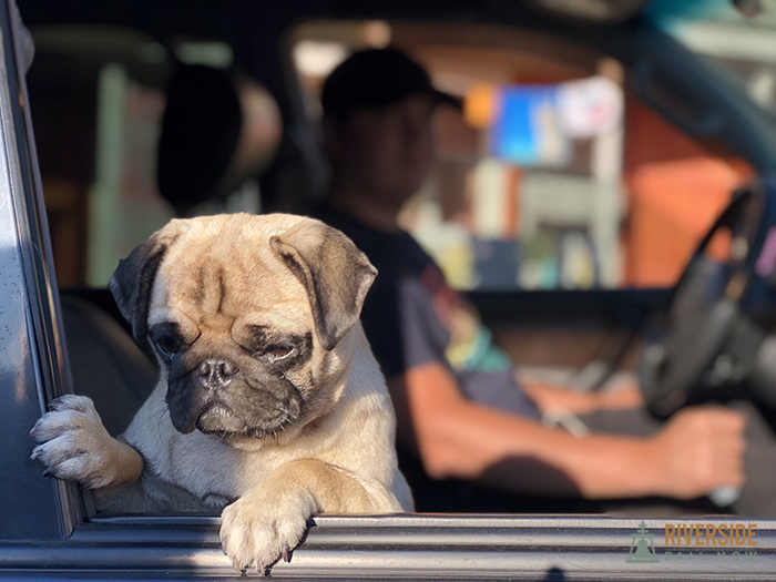 Found a Lost Pet? Here's What you Have to Do